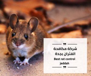 شركة مكافحة الفئران في جدة