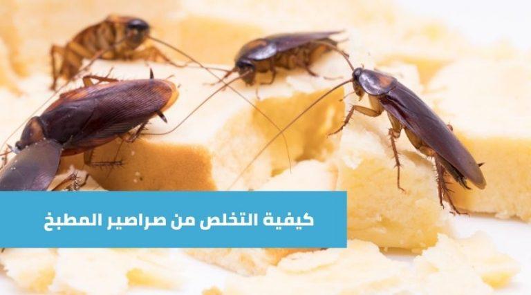 طريقة التخلص من الصراصير الصغيرة في المطبخ