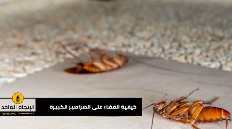 كيفية القضاء على الصراصير الكبيرة
