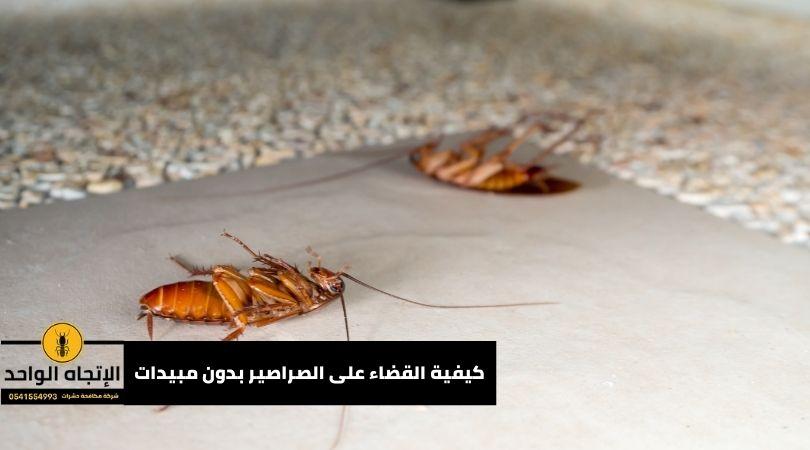 كيفية القضاء على الصراصير بدون مبيدات