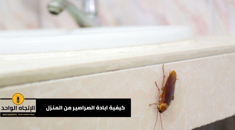 كيفية ابادة الصراصير من المنزل